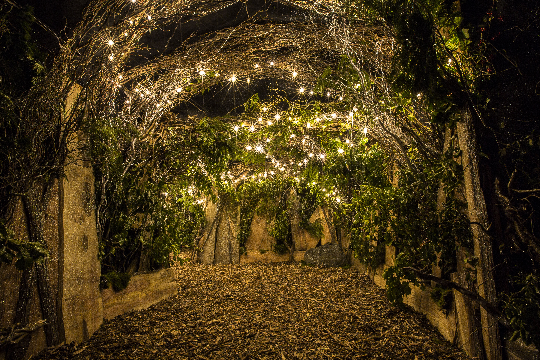 Backyard Cinema: Winter Night Garden @ Winterville – FMS